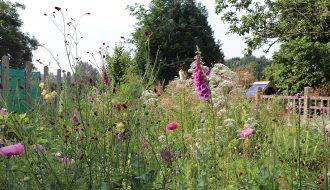 Sanguisorba officinalis, Digitalis purpurea, Valeriana officinalis, Papaver somniferum, Thalictrum flavum....