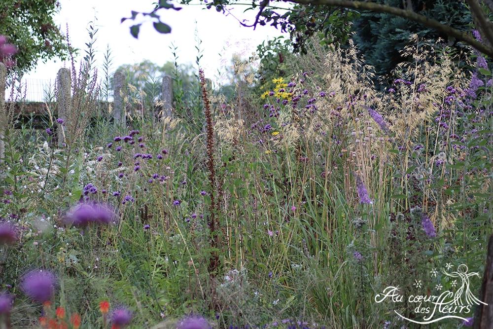 Verbena bonariensis, Stipa gigantea, Buddleia davidii, Inula helenium....