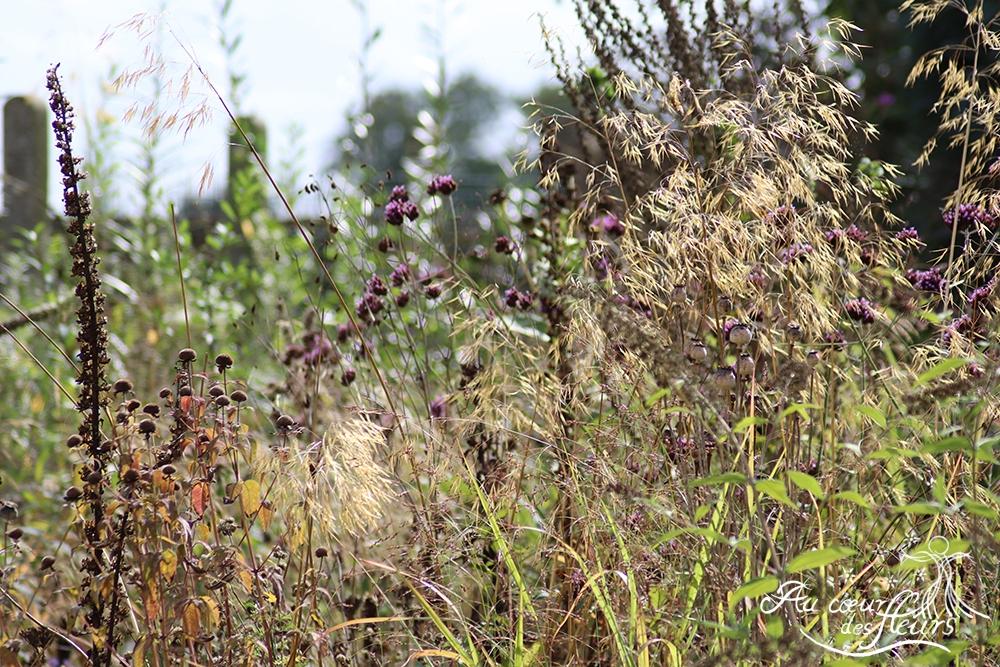 Inflorescences de Stipa gigantea, Monarda fistulosa, Digitalis purpurea et Verbena bonariensis