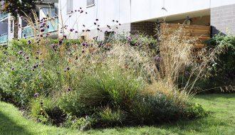 Descampsia cespitosa, Verbena bonariensis, Calamagrostis x 'Karl Foster'....