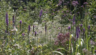 Gypsophilla paniculata, Liatris spicata, Papaver somniferum, Verbena bonariensis, Eupatorium maculatum....